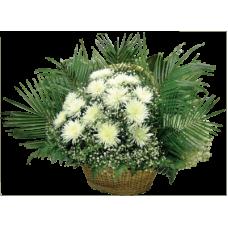 КОРЗИНА «ХРИЗАНТЕМА» ИЗ ЖИВЫХ ЦВЕТОВ (1,1м) (гвоздика100шт, хризантемы, аспарагус, гипсофилл)