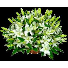 КОРЗИНА «ЛИЛИЯ» ИЗ ЖИВЫХ ЦВЕТОВ (1,1м) (лилия, аспарагус, рабелини)